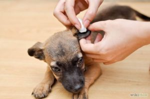 ear cleaner for dogs