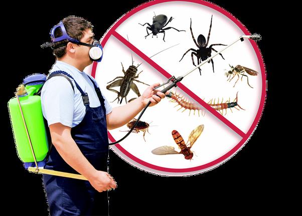 pest control hong kong
